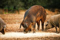 豚革について